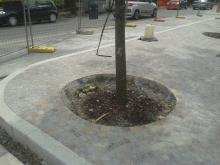 Interventi di tutela alle piantumazioni su viale Mazzini